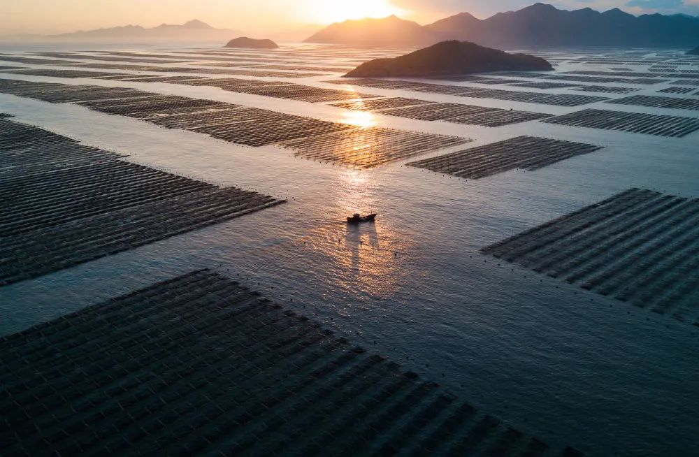 福建霞浦:落日渔归