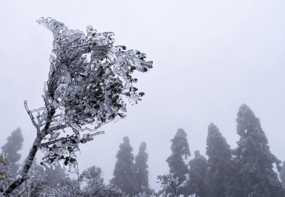 """水门:雾凇冰挂 美丽""""冻""""人"""